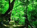 Koleshino Waterfall , 12.JPG