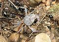 Krabbe zur Bestimmung.jpg