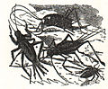 LA2-NSRW Crickets.jpg