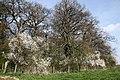 Ladyacre Wood , Calveley - geograph.org.uk - 394079.jpg