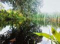 Lagoa Jamelão APP da Lagoa Encantada que faz parte da região dos alagados do Vale Encantado.jpg