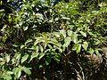 Lamtani (Marathi- लामतानी) (8630629607).jpg