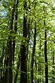 Landschaftsschutzgebiet Gütersloh - Isselhorst - Wald an der Lutter (2).jpg