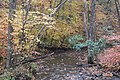 Laurel Hill State Park Fall Foliage - panoramio (12).jpg