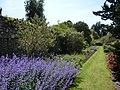 Lavender! Get your lavender! (6559826033).jpg