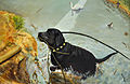 Le Labrador.jpg