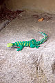 Legoland Windsor - Lizard (2835912670).jpg