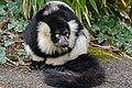 Lemur (26618921757).jpg