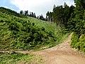 Lesné cesty - panoramio.jpg