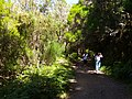 Levada do Risco, Madeira, Portugal, June-July 2011 - panoramio (38).jpg