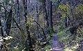 Lincoln NF trail 4.jpg