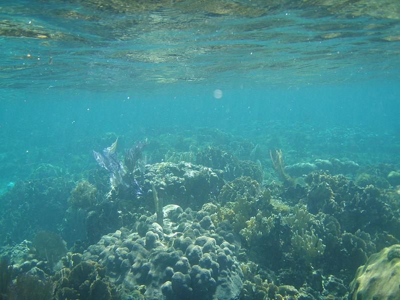 File:Live Coral, Belize.jpg