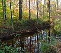 Loantaka Way NJ stream with reflections early autumn.JPG