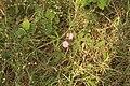 Local flowers 10.jpg