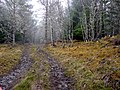 Logging track - geograph.org.uk - 692946.jpg