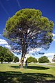 Lone Pine at the AWM.jpg