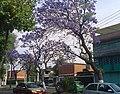 Los Reyes Ixtacala.jpg