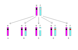 Loss of Heterozygosity.png