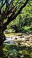 Lungo le sponde del Rio Fondillo.jpg