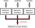 Mémoire sensorielles.png