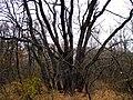 M3, Moldova - panoramio (3).jpg