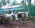MK's Adat Panchayat Image035.jpg