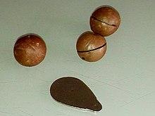 What Kind Of Nut Has A Hole >> Macadamia Wikipedia