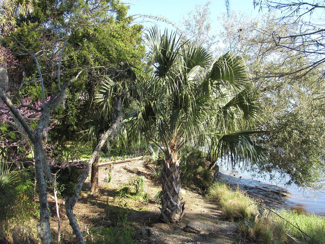 File Magnolia Plantation And Gardens Charleston South Carolina 8556502010 Jpg Wikimedia