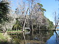 Magnolia Plantation and Gardens - Charleston, South Carolina (8556542736).jpg