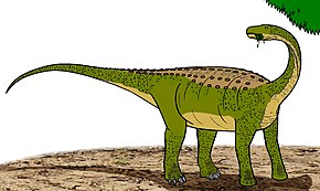 Description de l'image Magyarosaurus 04800.JPG.
