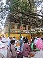 Mahabodhi temple and around IRCTC 2017 (70).jpg