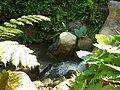 Mameyes II, Río Grande 00745, Puerto Rico - panoramio (12).jpg