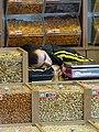 Man Snoozes in Shop - Baku - Azerbaijan (17875157346).jpg