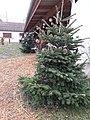 Marché de Noël - sapins (Ohnenheim).jpg