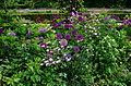 Massif de fleurs - Jardins de Bagatelle.JPG