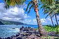 Maui 2 (237537427).jpeg