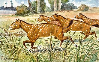 Mesohippus - Restoration