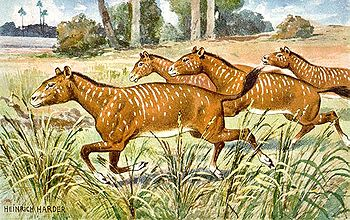Mesohippus, um antecessor do cavalo moderno