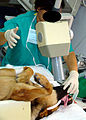 Military Work Dogs Require Special Care DVIDS122631.jpg
