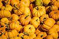 Mini Pumpkins (15324566801).jpg