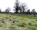 Molehills - geograph.org.uk - 1294832.jpg