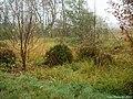Molinia-caerulea-habitat.JPG