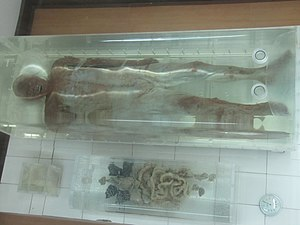 Jingzhou - A mummy discovered with all parts of the body, at the Jingzhou museum