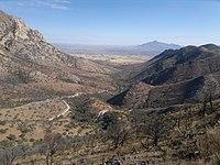 Pouštní údolí se zvlněnými kopci a řídkými stromy