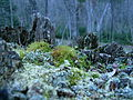 Moss world, Lake Superior Provincial Park.JPG