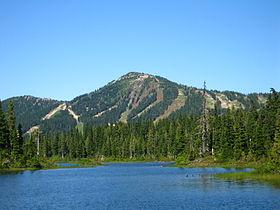 Vancouver Island Marmot Mount Washington