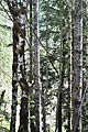 Mt. Walker Viewpoint Rd 03.jpg
