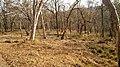Mudumalai Tiger Reserve - panoramio (22).jpg