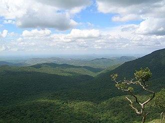 Mudumalai National Park - Image: Mudumalai forest