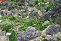 Muenster Botanischer Garten 5989.jpg